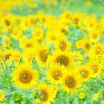 夏の養生法イメージ